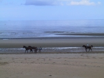 French residents exercise their horses early one morning on Utah Beach.